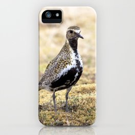 Watercolor Bird, European Golden Plover 01, Geysir, Iceland, Hunting the Vents iPhone Case