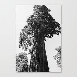 Sequoia National Park VI Canvas Print