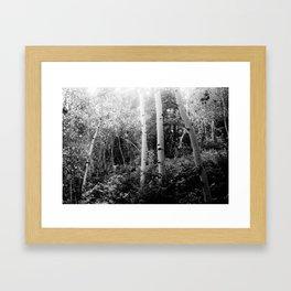 The Aspen Grove, No. 2 Framed Art Print