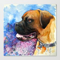 boxer Canvas Prints featuring Boxer by oxana zaika