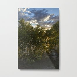 Mangroves at Sunset Metal Print