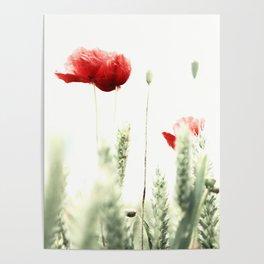 Poppy Poppies Mohn Mohnblume Poster