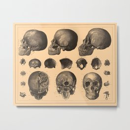 Iconographic Encyclopedia of Science, Literature and Art (1851) - The Human Skull Metal Print