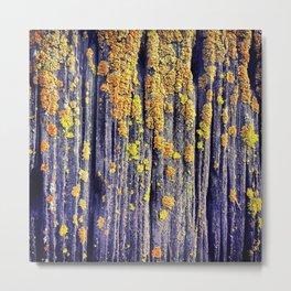Mossy Wood Texture Metal Print
