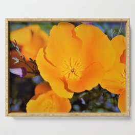 California State Poppy in Bloom by Reay of Light Photography Serving Tray