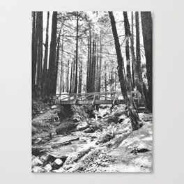 Forest and Creek Canvas Print