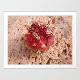 Cactus Fruit Art Print