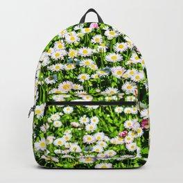 Field of daisy flowers Backpack