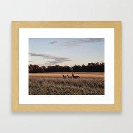 Deers going home Framed Art Print
