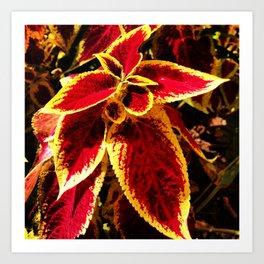 Flor Art Print