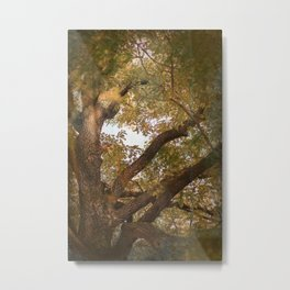 A Look Into The Ethers Metal Print
