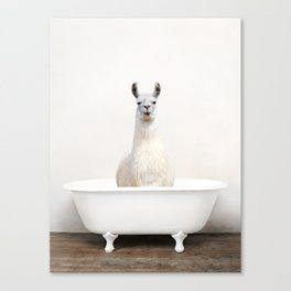 llama Bath (c) Canvas Print