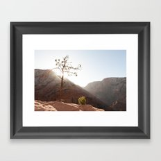 Morning Light on Angel's Landing Tree (Zion National Park, Utah) Framed Art Print