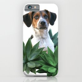 Agave Leaves Jack Russell Terrier Dog iPhone Case