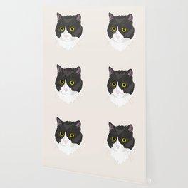 Casual Cat Wallpaper