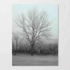 Misty morning /photo Canvas Print