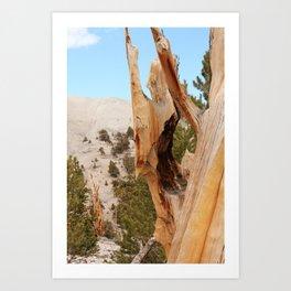 Bristlecone 6 Art Print