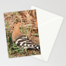 Eurasian hoopoe posed in the grass of a meadow Stationery Cards
