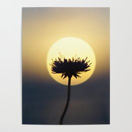 The Sunset Poster