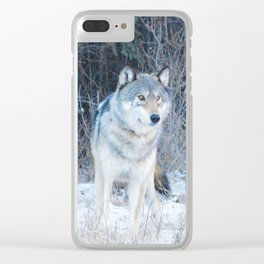 Grey Wolf in the Canadian Rocky Mountains Clear iPhone Case