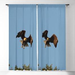 Bald eagle in flight Blackout Curtain