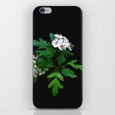 Blossom iPhone & iPod Skin