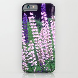 Lupines I iPhone Case