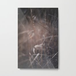 The Last Threads of Winter Still Linger Metal Print