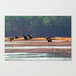Flying Canadian Geese Canvas Print