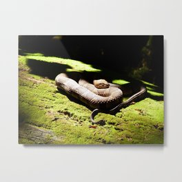 coiled death II Metal Print
