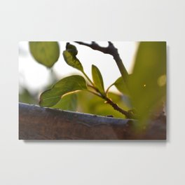 Leaves at Evening Metal Print