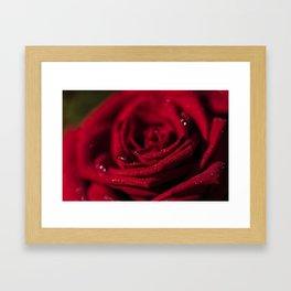 Fire - Red - Rose - Roses Flowers Framed Art Print