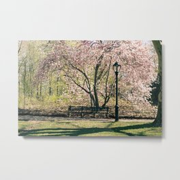 Magnolia's Bloom in Central Park Metal Print