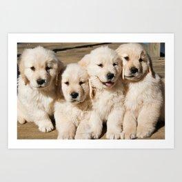 Cute Golden Retriever Puppies Art Print