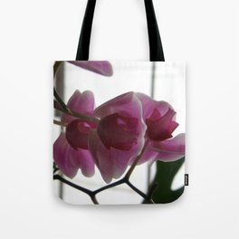 Orchids #1 Tote Bag