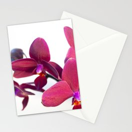 Orchid Flowers 05 Stationery Cards