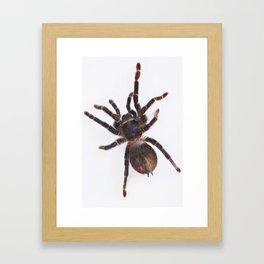 Tarantula Framed Art Print