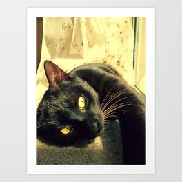 Cat,morning sun Art Print