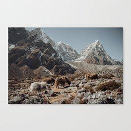Himalayan yaks Canvas Print