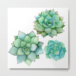 succulents Metal Print