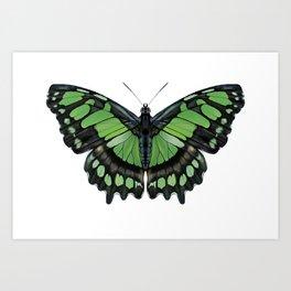 Green Malachite Butterfly Art Print