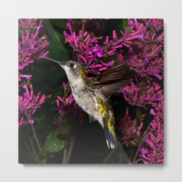 Hovering hummingbird and agastache 59 Metal Print