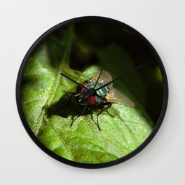 But A Fly Wall Clock