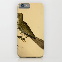 Vintage Print - The Austral Avian Record (1912) - Olive-Backed Oriole iPhone Case