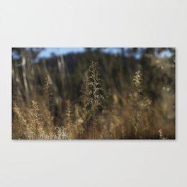 Delicate Grass Canvas Print