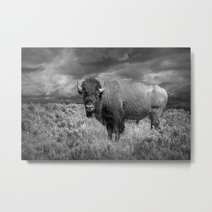 American Buffalo Bison in Yellowstone National Park in Montana a Black and White Version 35863 Metal Print