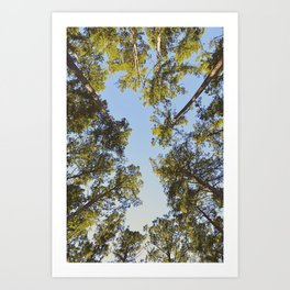 Branches and the Sky Art Print