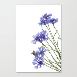 Slant blue cornflower flowers Canvas Print