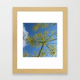Fennel Framed Art Print