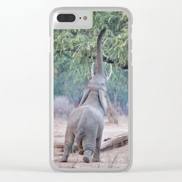 Elephant reaching for Acacia tree Clear iPhone Case